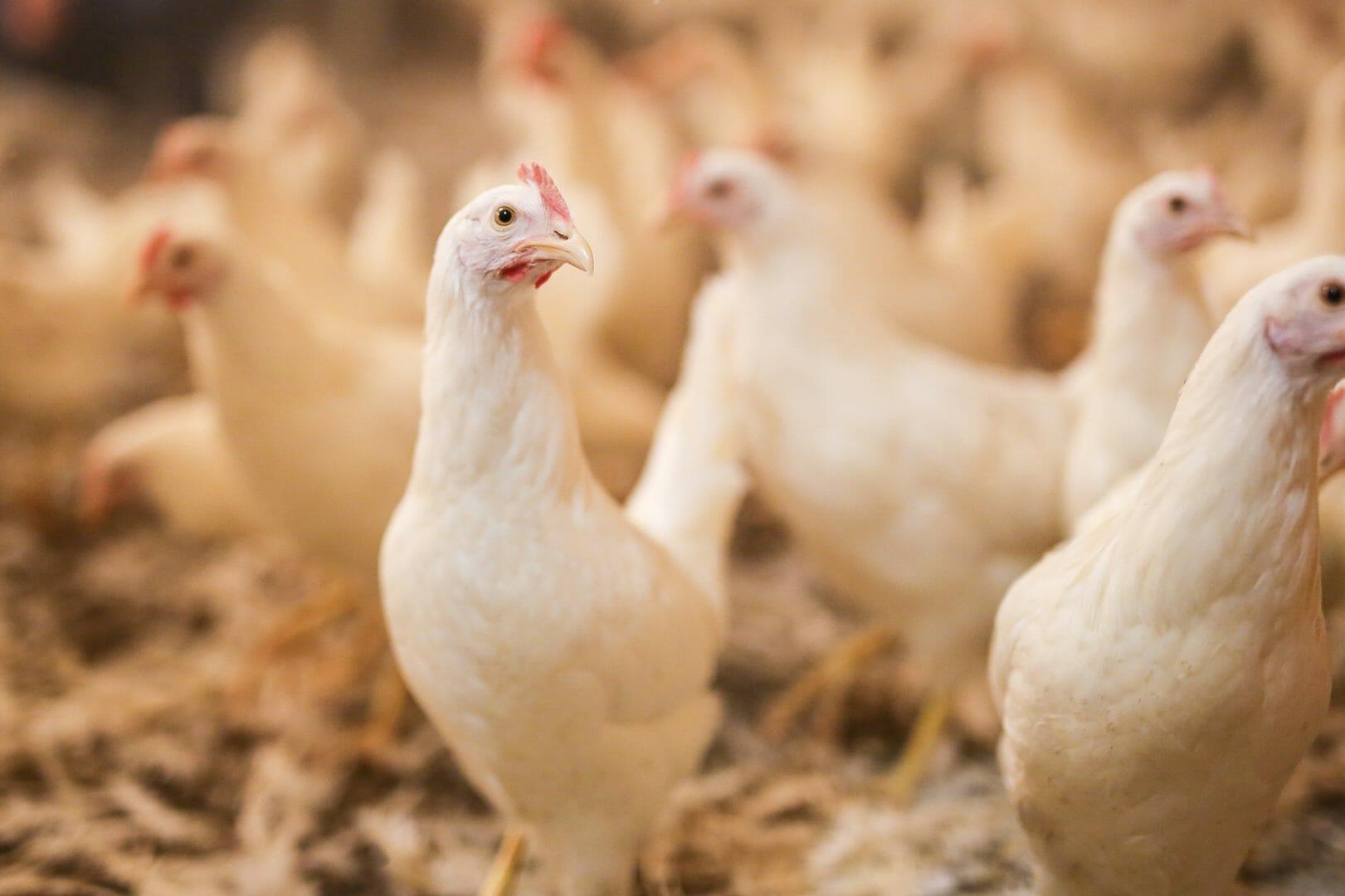 Maßnahmen, mit denen Sie Hitzestress bei Ihren Tieren vermeiden