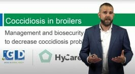 Webinar Royal GD & HyCare_ Coccidiosis problems in broilers (EN)