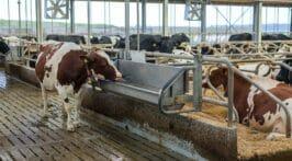 Schoon drinkwater voor melkvee